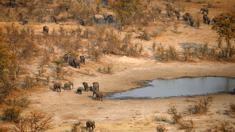 Foto de archivo de una manada de elefantes en el área de Mababe, Botswana, el 19 de septiembre de 2018.