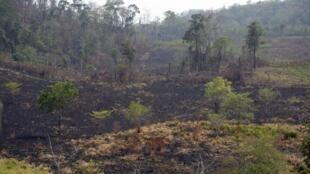 Los departamentos que reportan mayor superficie afectada son Huehuetenango (noroeste) con 1.550 hectáreas y Jalapa (este) con 1.320 hectáreas; ambos representan el 49,47% de suelo guatemalteco afectado por las llamas