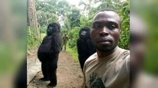 Mathieu Shamavu y dos gorilas posan para una selfie en el Parque Nacional Virunga, República Democrática del Congo.
