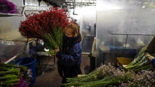 Una empleada trabaja en una empresa de flores de Bogotá, el 1 de febrero de 2021
