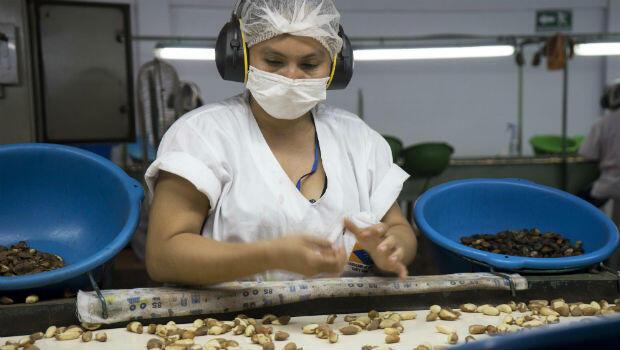 El proceso de limpieza de las almendras bolivianas es realizado de manera manual.