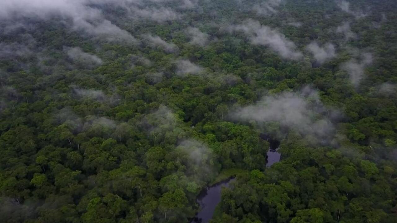 لماذا لا تثير الحرائق في أفريقيا نفس الاهتمام الدولي كحرائق الأمازون؟