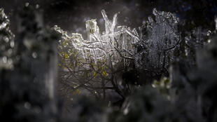 Icicles form on a bush in downtown Houston, Texas this week amid a nationwide cold snap