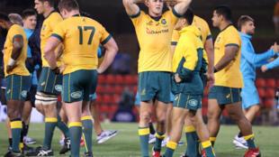 Les joueurs australiens, dont Reece Hodge (centre), expriment leur déception à l'issue de leur match nul contre l'Argentine, le 21 novembre 2020 à Newcastle