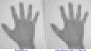 Des scientifiques ont réussi à embedder une image et un GIF dans un ADN de cellule vivante.