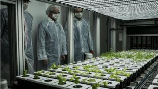 Des scientifiques à la FUL (ferme urbaine lyonnaise), pionnière en matière d'agriculture urbaine dans l'Hexagone, en 2016.