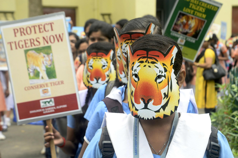 Des élèves indiens militent pour la protection des tigres