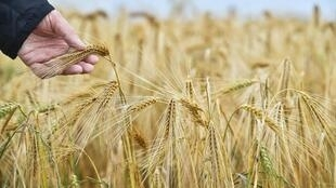 Officials played down fears Australia was headed for a trade war with China, its biggest export market for barley