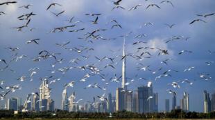 مبان في دبي في 8 كانون الثاني/ديسمبر 2020