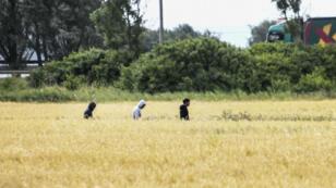 Des migrants dans un champ, non loin du port du Calais.