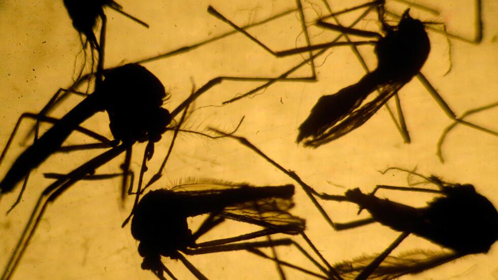 Microcéphalie : des scientifiques accusent un insecticide ...