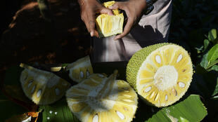 """India, the world's biggest producer of jackfruit, is capitalising on its growing popularity as a """"superfood"""" meat alternative -- touted by chefs from San Francisco to London for its pork-like texture when unripe"""