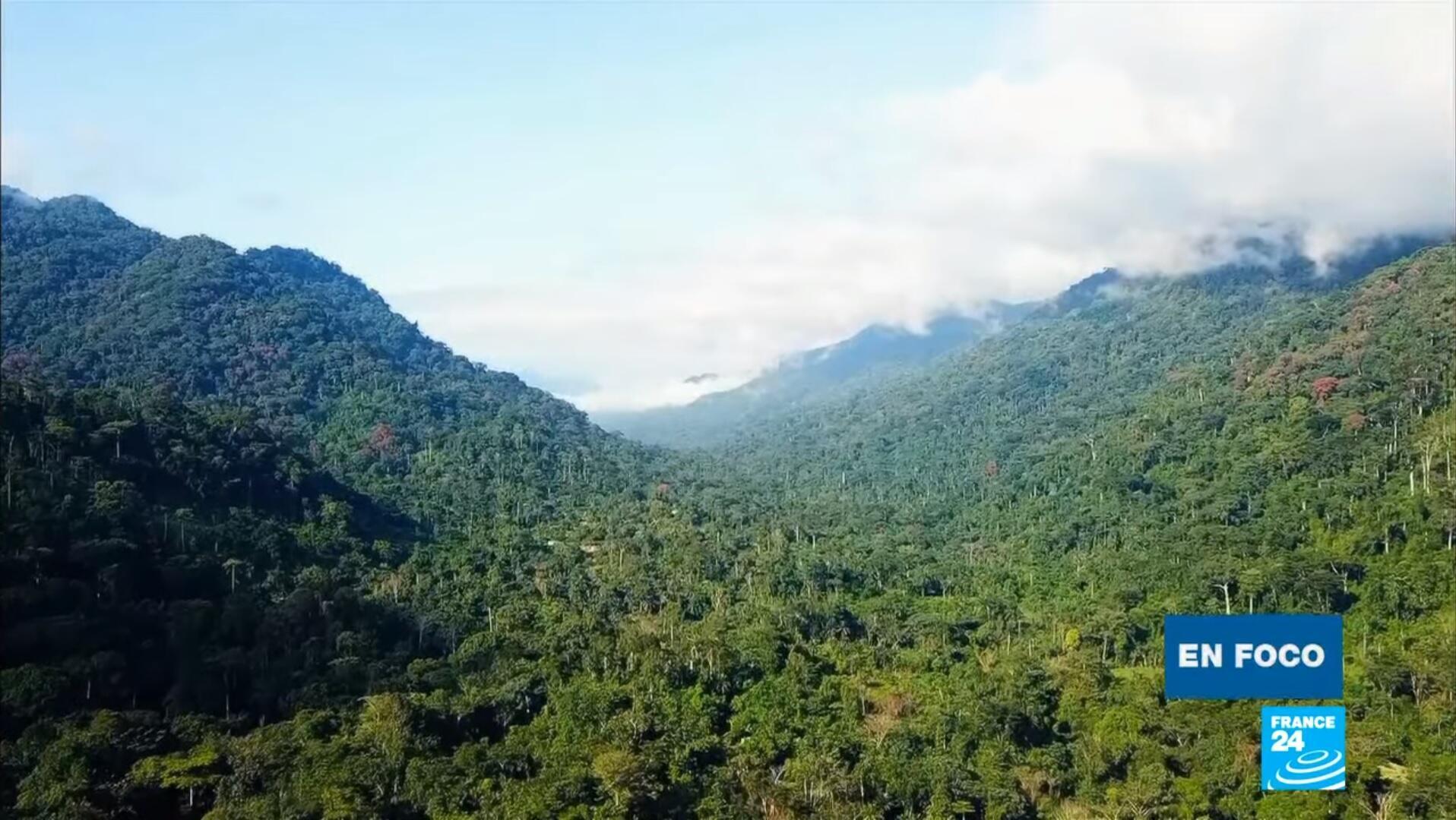 En Foco bosque de Ebo