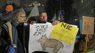 Activists have protested against a mass cull of wild boar ordered by Polish authorities to stem the spread of African swine fever that poses a threat to the country's pork industry