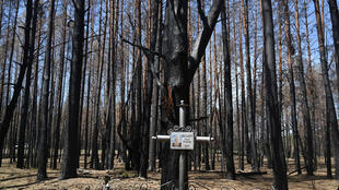 Charred trees loom over a grave at the cemetery near Rozsokha inside the Chernobyl exclusion zone following the worst fire since the 1986 nuclear disaster