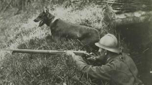 Un chien sentinelle, le 12 août 1916, à Wesserling, dans le Haut-Rhin.