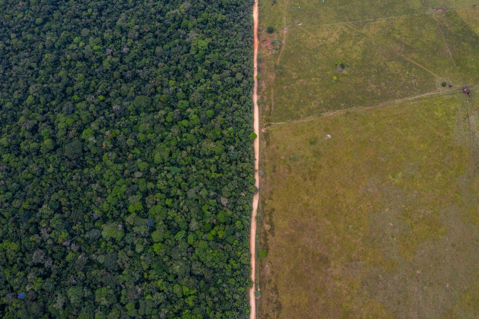 La geometría de la deforestación: una carretera entre los poblados de los pozos y San Juan de Lozada, en Caquetá, marca la división entre selva y potrero, entre el mundo salvaje y la 'civilización', que cada día gana terreno para generar tierras para la ganadería. Las carreteras son la punta de lanza de talas masivas, como lo ha sido la vía ilegal de 138 kilómetros entre Miraflores y Calamar, en Guaviare.