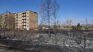 Des arbres brûlés à Poliske, dans la zone d'exclusion de Tchernoby, le 13 avril 2020.