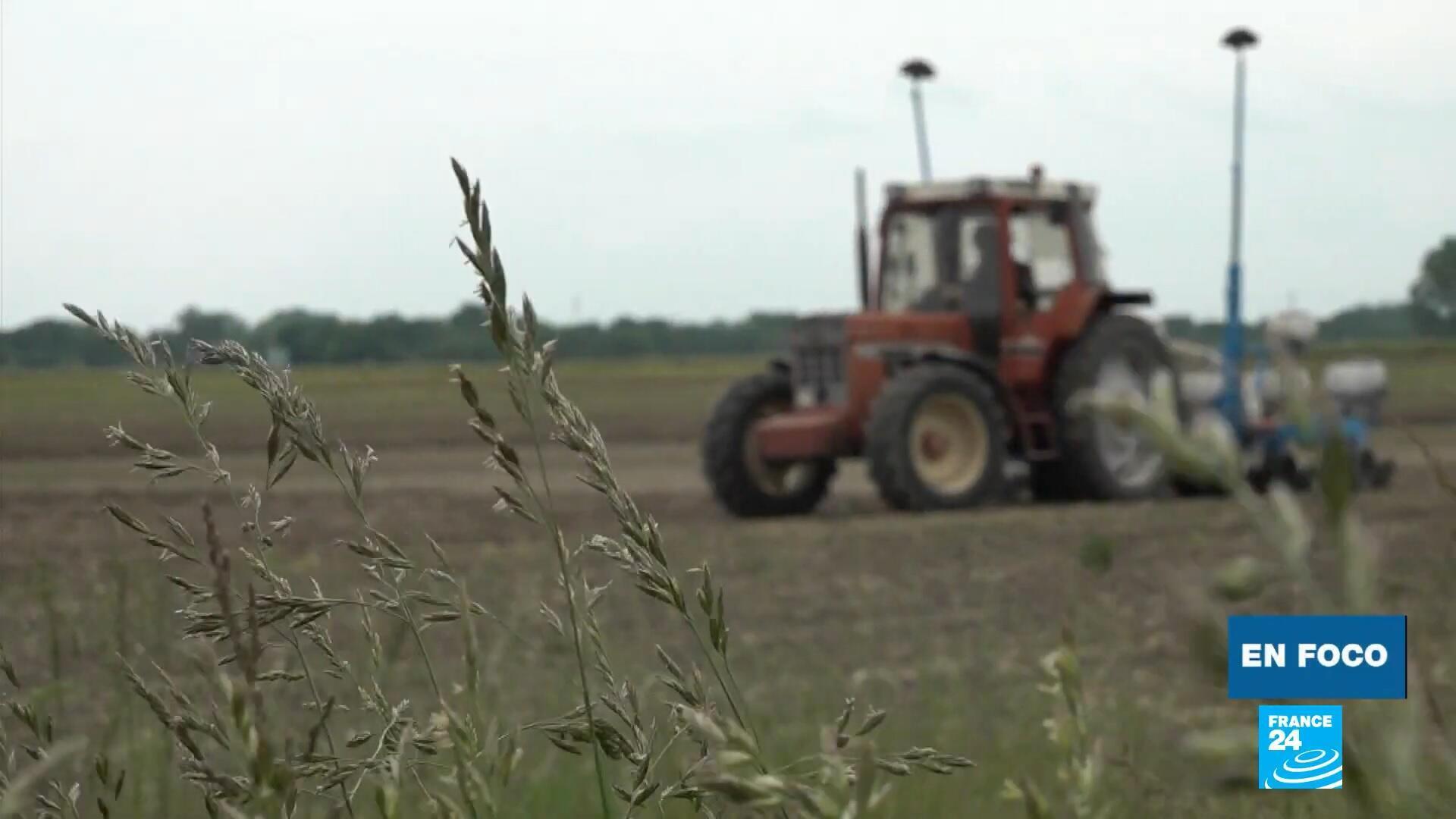 En Foco - cultivo soja Francia