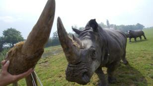 Les cornes de rhinocéros se vendent fréquemment sur Internet.