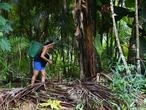 """Au Brésil, la violence des """"mafias"""" alimente la déforestation de l'Amazonie"""