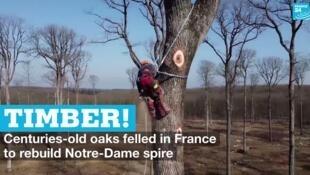 vignette notre dame trees