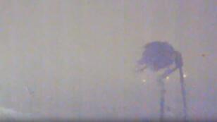 Le palmier, surnommé Hector par les internautes, résiste à l'ouragan Irman dans le port de Gustavia, à Saint Barth.