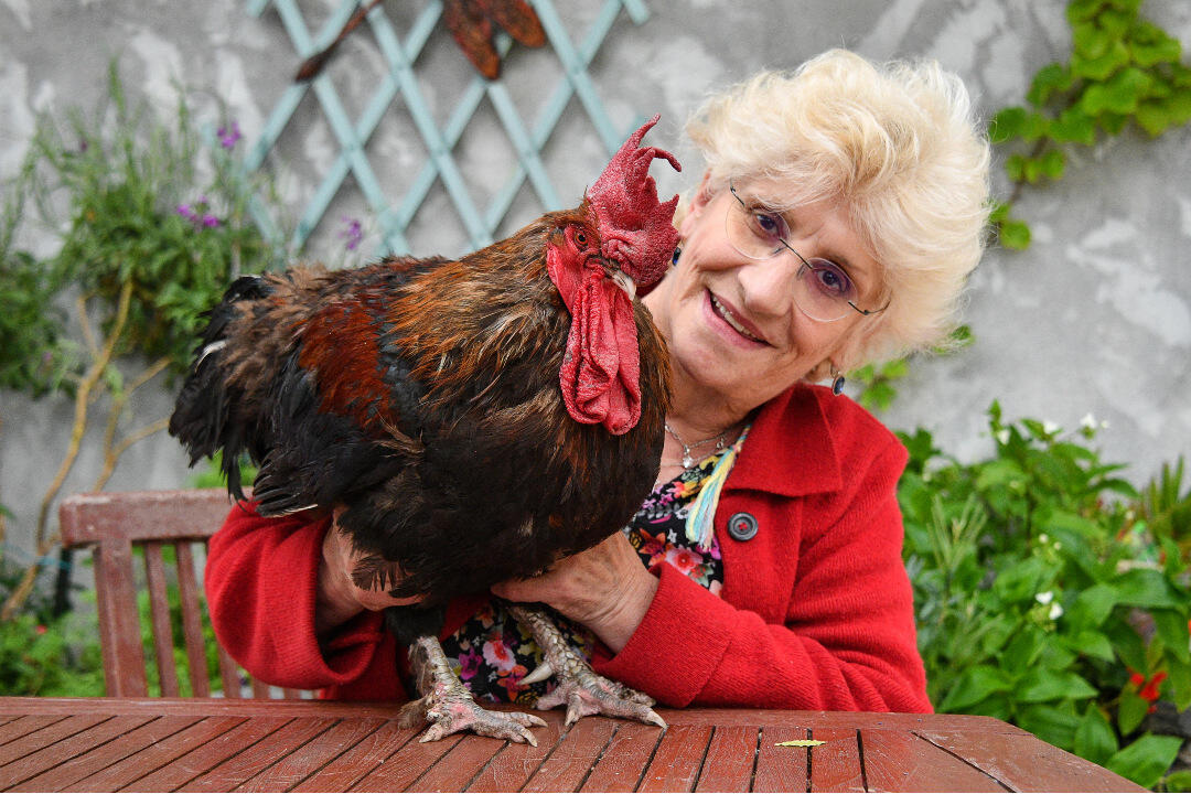 Maurice rooster Corinne
