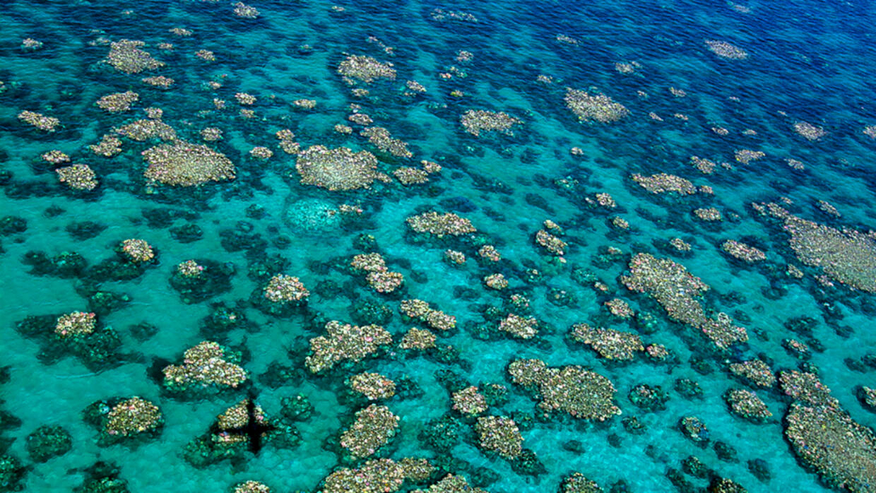 Warning Of Severe Damage To Great Barrier Reef After Second