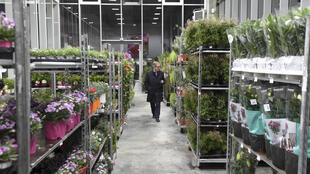 La zona de flores del mercado al por mayor de la ciudad francesa de Rezé, en una imagen del 7 de marzo de 2019