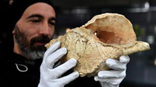 Guillaume Fleury, empleado del Museo de Historia Natural, muestra una caracola  hallada en 1931 en la cueva de Marsoulas, en los Pirineos franceses, durante un encuentro celebrado el 10 de febrero de 2021 en el museo de Toulouse