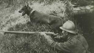 Un perro centinela, el 12 de agosto de 1916, en Wesserling, en Haut-Rhin.