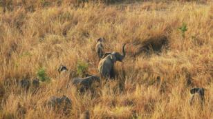 L'importation aux États-Unis des très recherchés défenses d'ivoire avait été interdite en 2014, sous la présidence de Barack Obama.