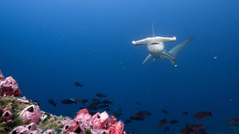 Fotografía sin fecha, cedida por la Fundación PACÍFICO, que muestra varios tipos de peces que habitan en los mares de Costa Rica y Ecuador.