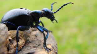 لماذا تفقد هواتفنا المحمولة الحشرات القدرة على تحديد اتجاهها وتسبب لها القلق؟