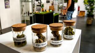 En juillet 2018, une boutique vendant du cannabis à usage thérapeutique avait dû fermer à Annœullin, près de Lille, peu de temps après son ouverture en mai.