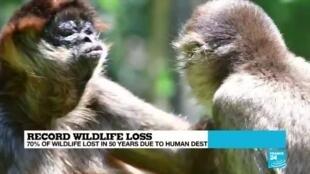 2020-09-10 07:14 WWF warns of a massive drop in global wildlife populations