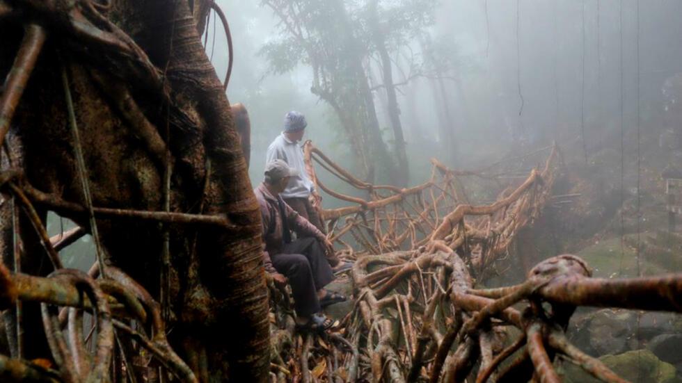 """Hace más de quinientos años, en el estado indio de Meghalaya, los habitantes comenzaron a construir puentes con raíces de árboles. Los llamados """"puentes vivientes"""" o """"puentes raíz"""" son indispensables para la población local..."""