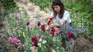 Masami-Charlotte Lavault entretient ses fleurs dans son jardin parisien, le 1er juillet 2020