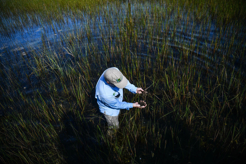 Everglades Foundation Scientific Director Steve Davis collects weeds and algae in Everglades National Park, Florida on September 30, 2021