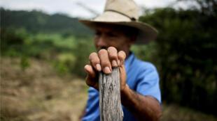 Un campesino trabaja el viernes 15 de noviembre en el municipio de Cantarranas, al noreste de Tegucigalpa, Honduras. El desempleo y la pobreza afectan a más del 60 % de los 9,3 millones de hondureños.