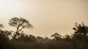 Le parc de la Pendjari, dans le nord du Bénin, est frontalier de l'est du Burkina, dans une zone forestière et réputée poreuse.