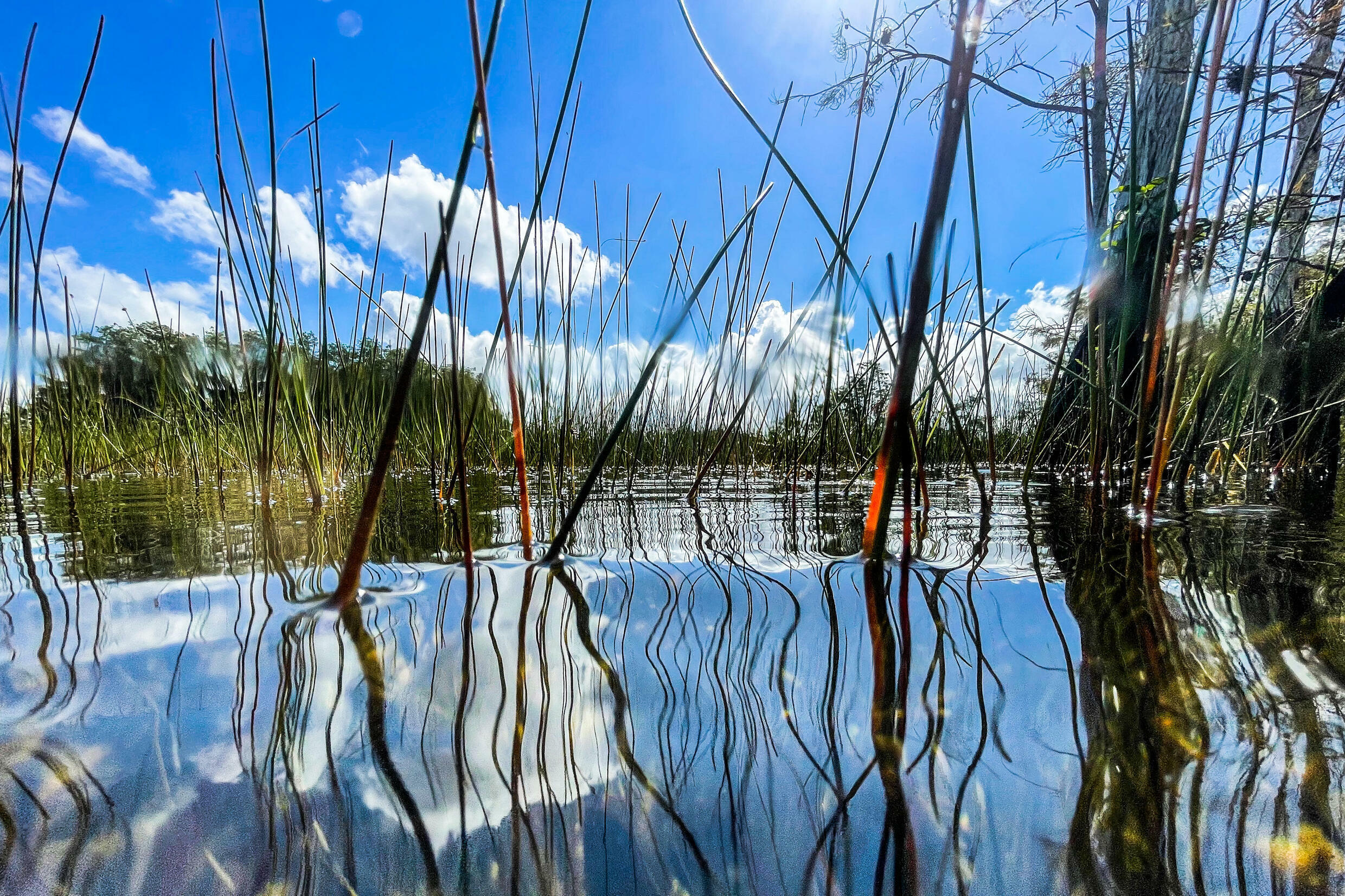 Aquatic vegetation grows above the water in Everglades National Park, Florida on September 30, 2021