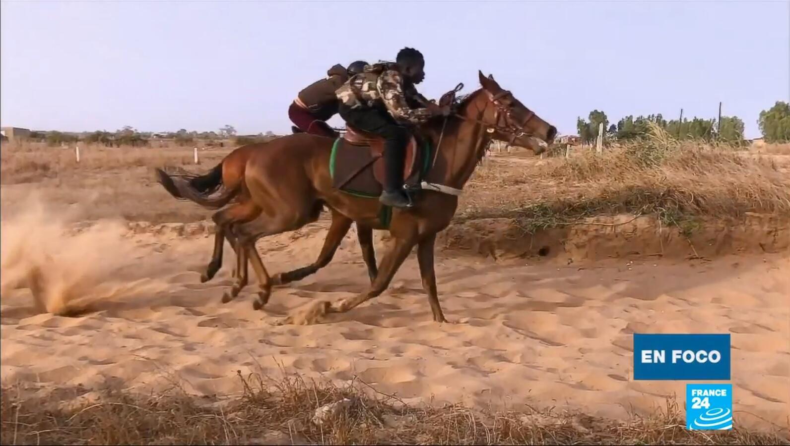 en foco - carreras caballos Senegal