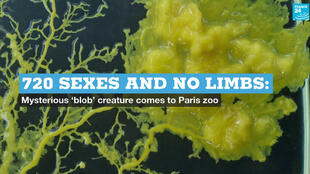 "A creature known as ""the blob"" will soon go on display at a zoo in Paris."