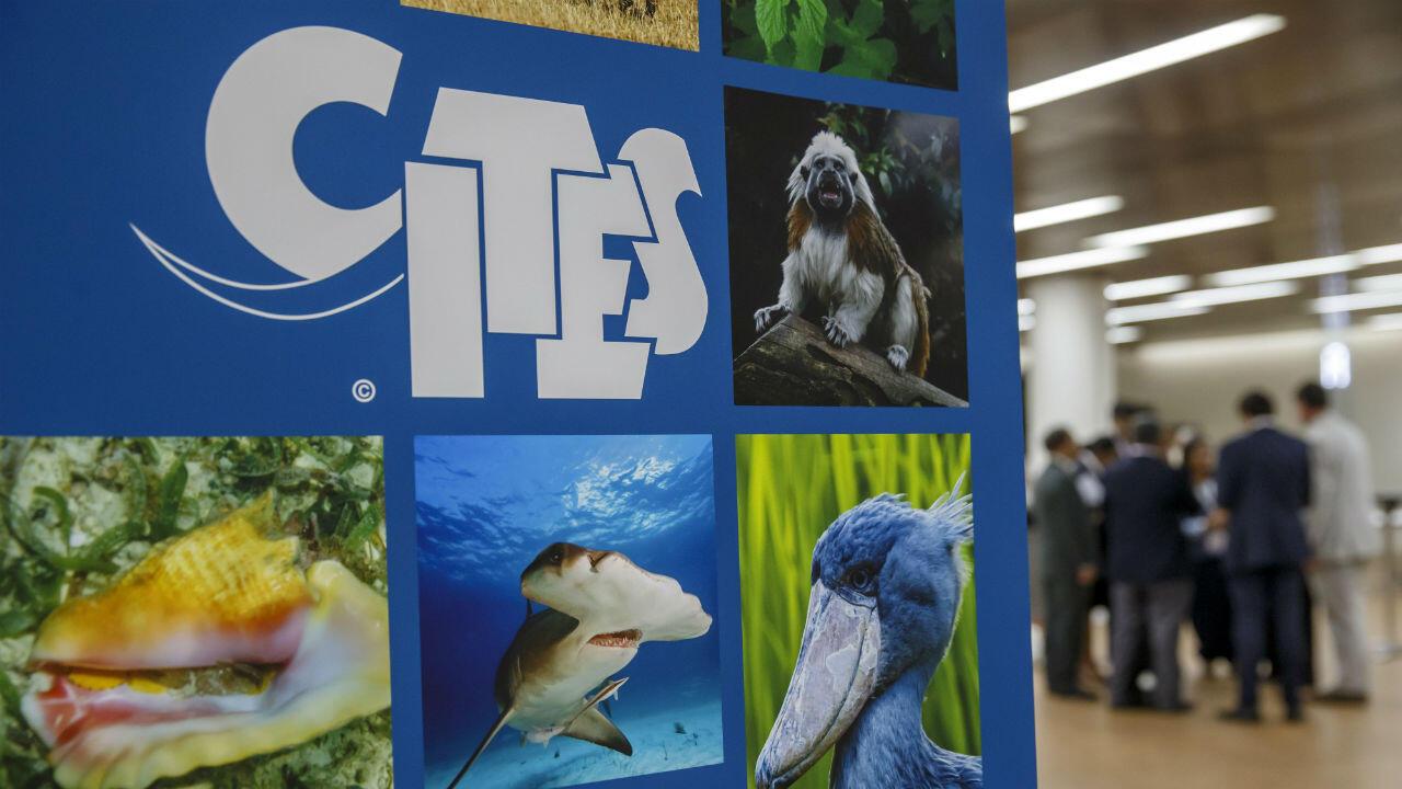 Día de apertura de la Conferencia Mundial de Vida Silvestre (CITES CoP18) en Ginebra, Suiza, el 17 de agosto de 2019.