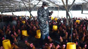 Le gène responsable de la résistance des bactéries aux antibiotiques a été détectée dans des élevages de porcs et de poulets en Chine.