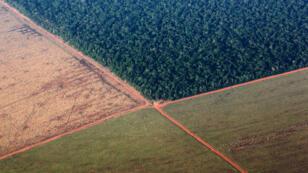 La forêt amazonienne, poumon vert de la planète, subit de plein fouet la déforestation. Ici, au profit de plantations de soja.