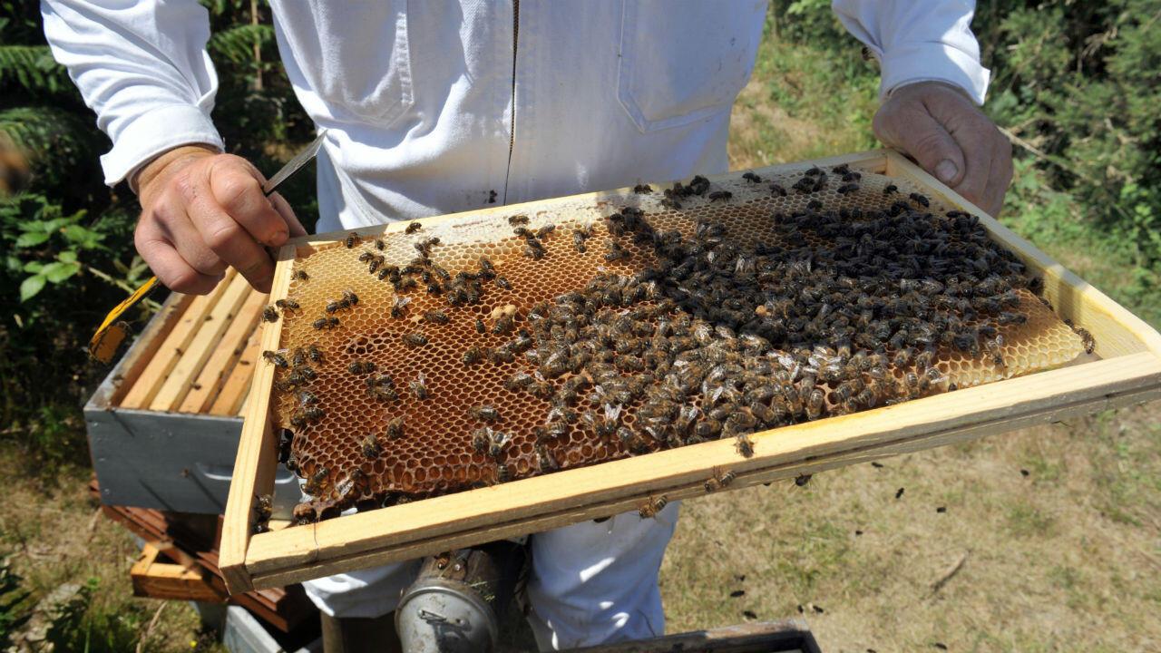 Les conditions météorologiques de 2019 vont peser sur la production de miel.