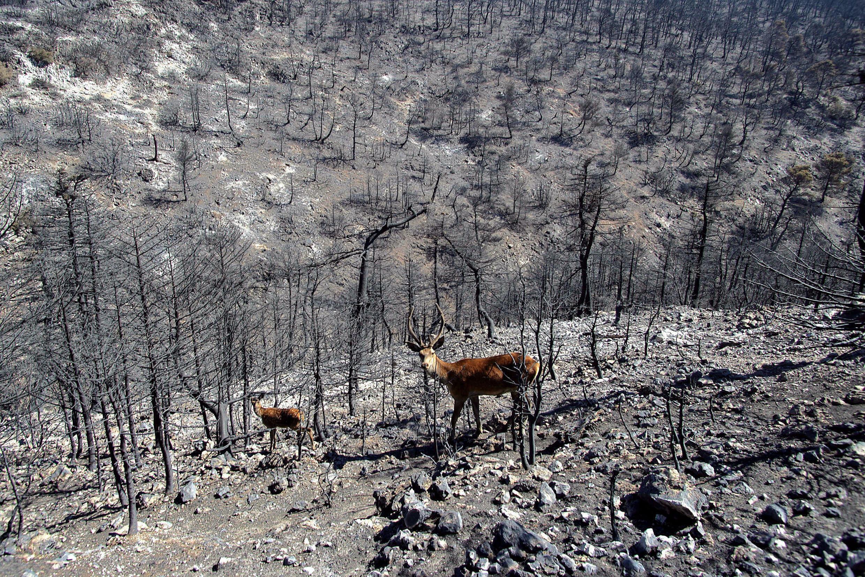 De nombreuses régions de la Grèce ont été brûlées cet été, y compris des points chauds de la biodiversité